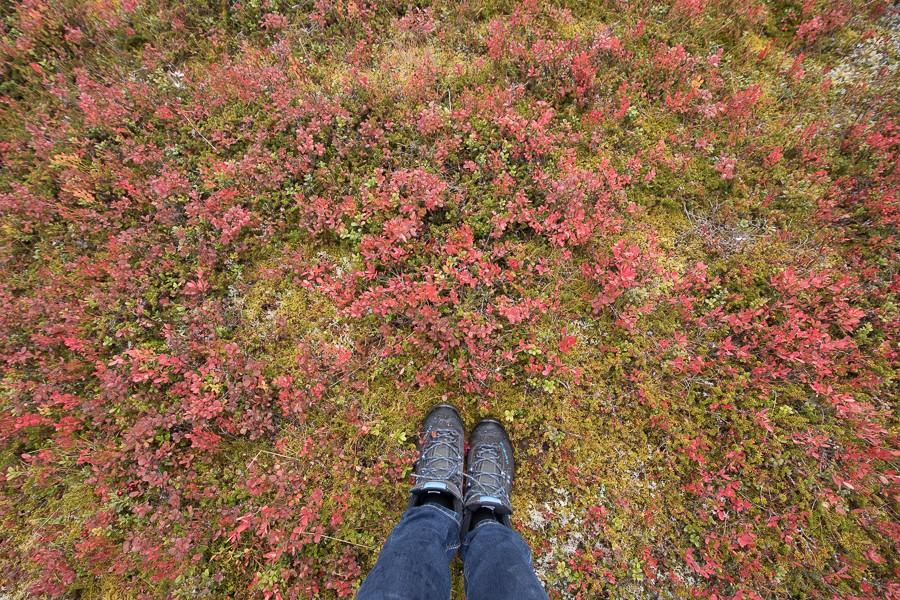 Waldboden in Lappland im Herbst ©Tarja Prüss - Tarjas Blog - Alles über Finnland