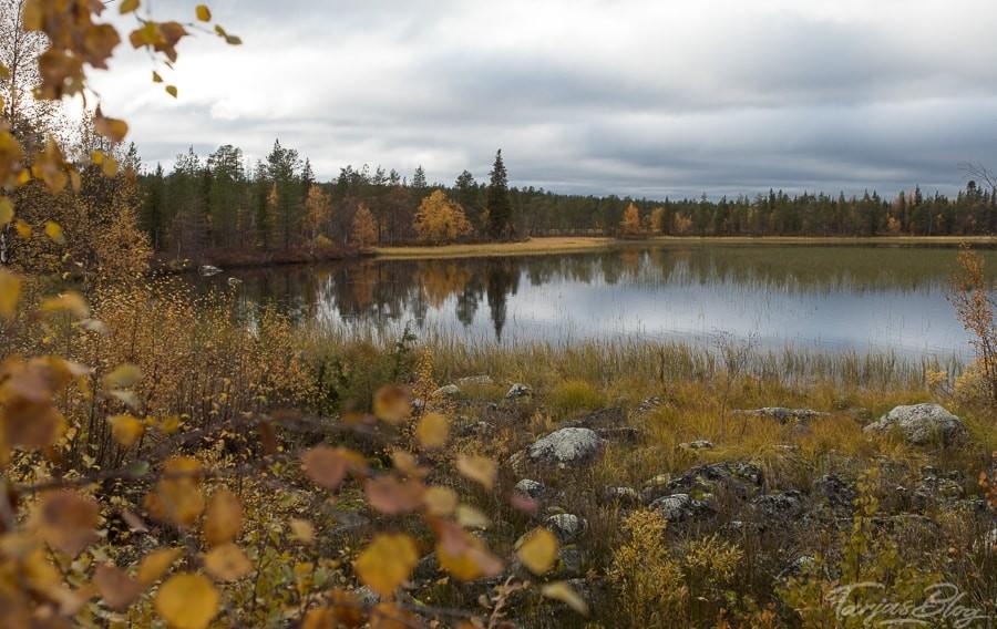 Herbst in Lappland - Blick auf See mit gelb eingefärbten Blättern