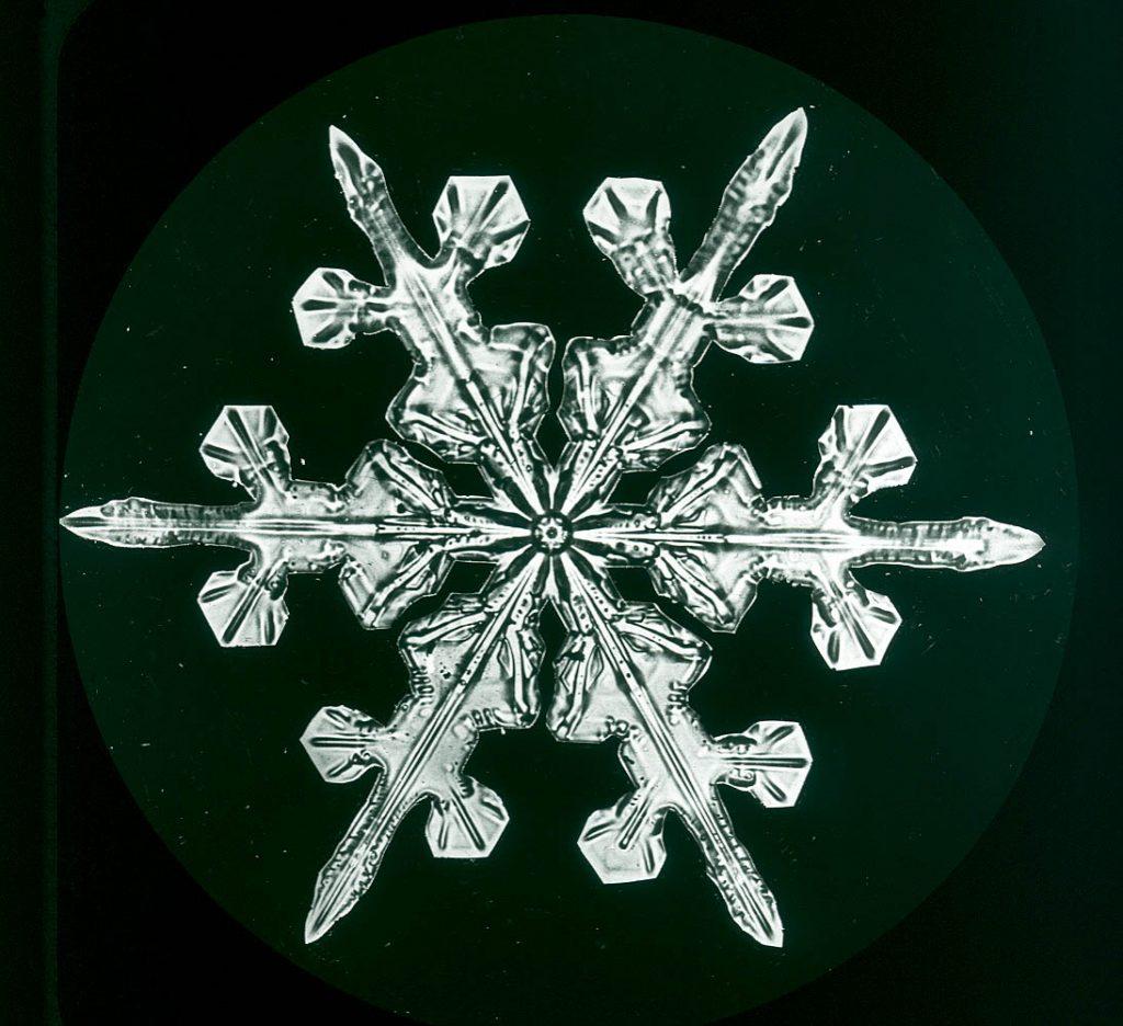 Snowflakes Wilson Bentley