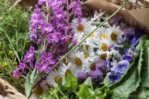 Blumen und Kräuter